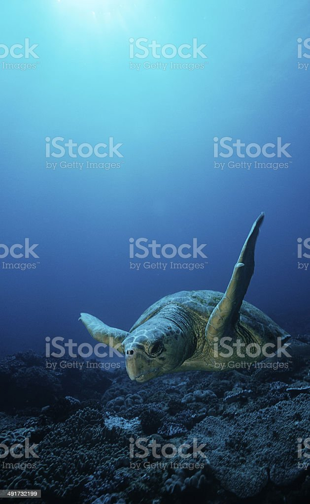 Sea life stock photo
