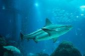 Different sea animals underwater