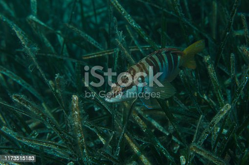 Sea life Saltwater Fish  Underwater beauty