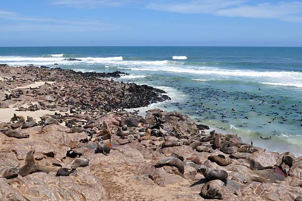 sea life,Namibia stock photo