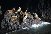 Sea Lion Caves - Florence Oregon USA