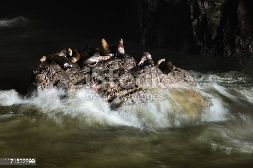A colony of sea lions rest atop a rock inside a Pacific coastal cave with white surf rising up around them from olive green water.  Natural lighting from the cave entrance illuminates the the animals, which stand out from the somewhat dark cave interior.  Long exposure blurred the rising white water surf around the rock.  Some animals are in focus and some show motion blur.
