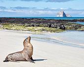 Sea Lion on San Cristobal Island Galapagos