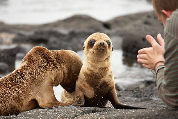 Sea lion pups on Galapagos Islands Sea lion pup on beach Galapagos Islands seal pup stock pictures, royalty-free photos & images