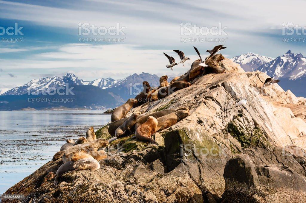 Lobos marinos y Albatros en la isla en el canal de beagle cerca de Ushuaia (Argentina) - foto de stock