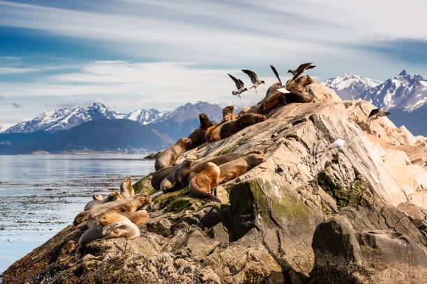 Seelöwen und Albatros auf Isla im Beagle-Kanal in der Nähe von Ushuaia (Argentinien) – Foto