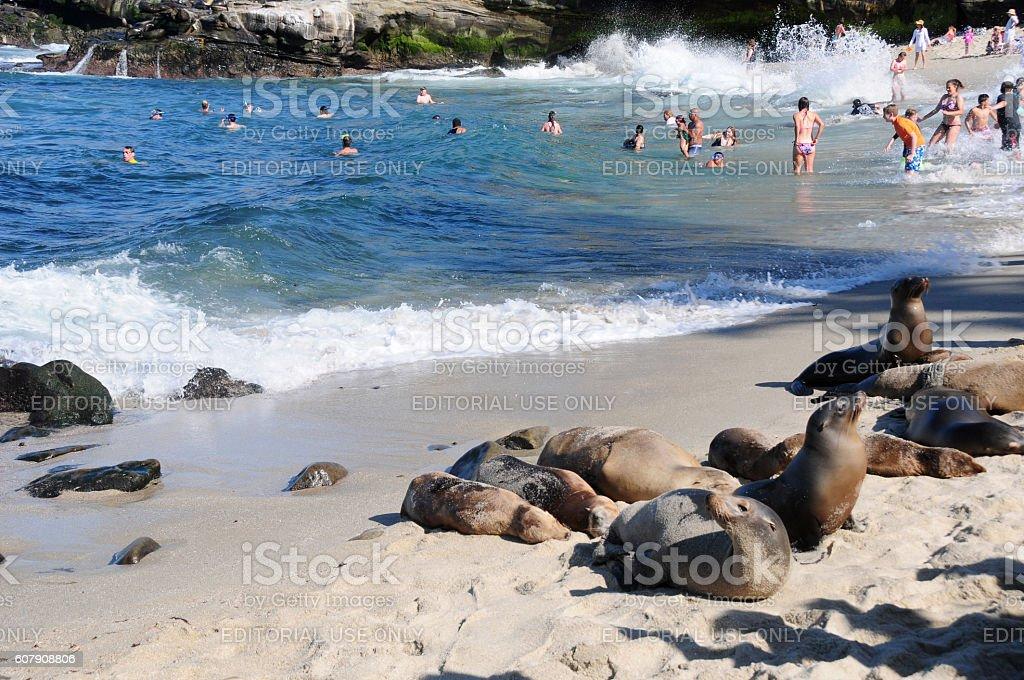 Sea Lions and people at La Jolla Cove, California stock photo