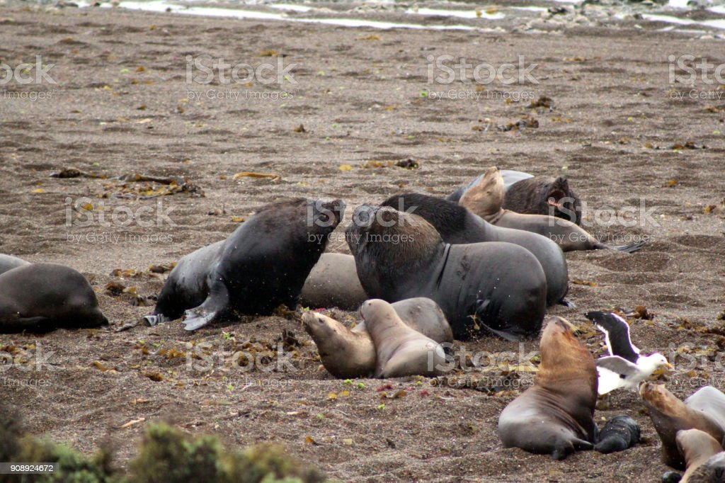 Sea lions close up stock photo