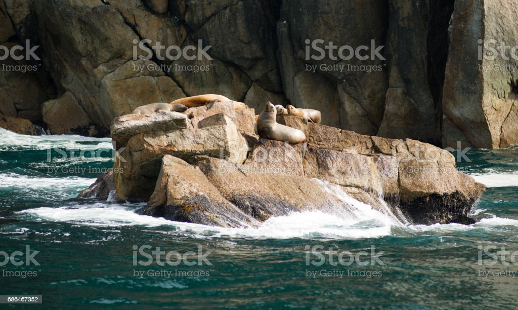 Sea Lions Dry Out Rocky Outcroppings Alaska Valdez Arm stock photo