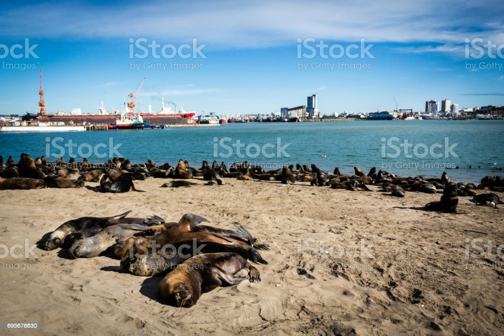 Sea lions in the sand - Royalty-free Animal Stock Photo