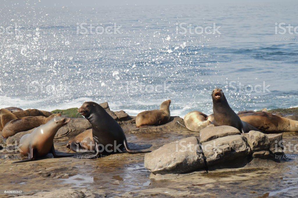 Fotografía de Lobos Marinos La Jolla San Diego Estados Unidos y más ...