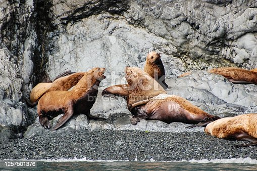 The beauty of the Prince William Sound wildlife was on full display as sea lions frolicked on the rocks