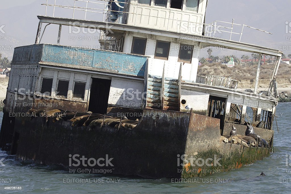 Sea lions on abandoned ship royalty-free stock photo