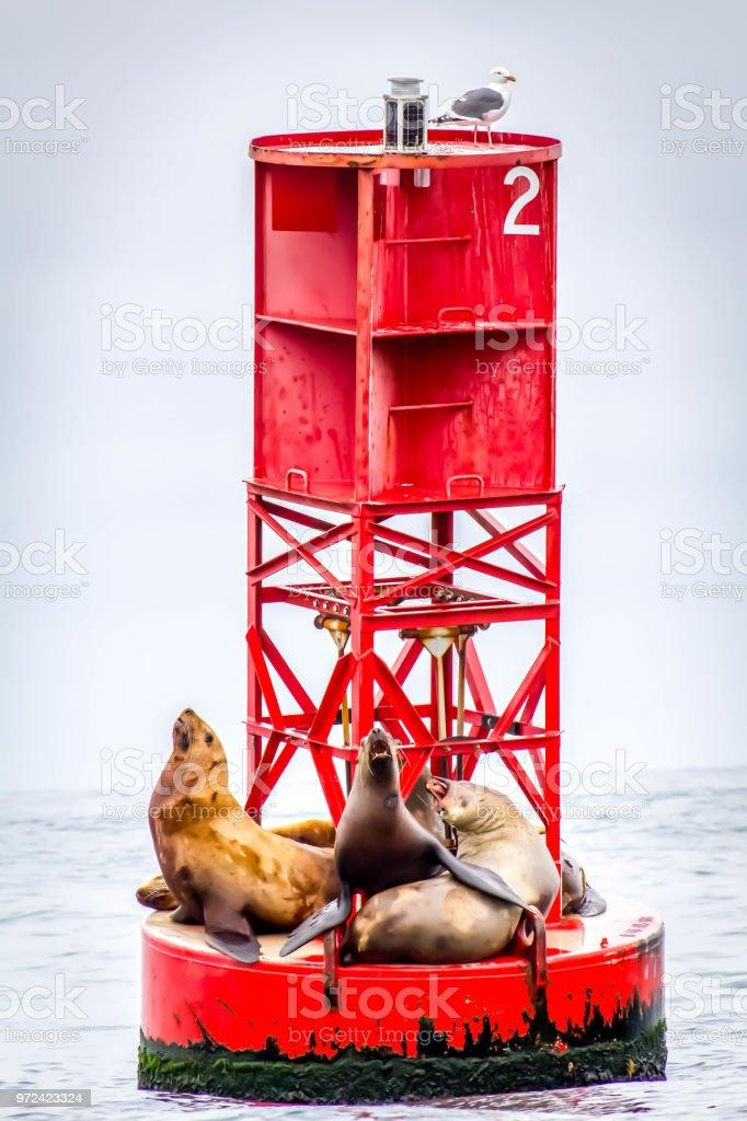 Sea Lions on Buoy stock photo