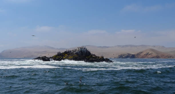 Sea lions on the islands Palomino, excurison in Peru Excursion in Peru where the tourists can swim with the sea lions in the Pacific ocean. Palomino islands and beauty of the nature in South America palomino stock pictures, royalty-free photos & images