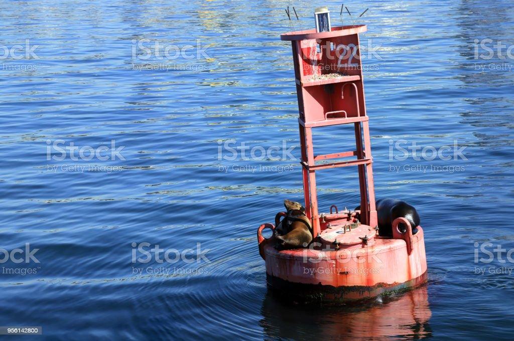 Sea lions sit on a bouy stock photo