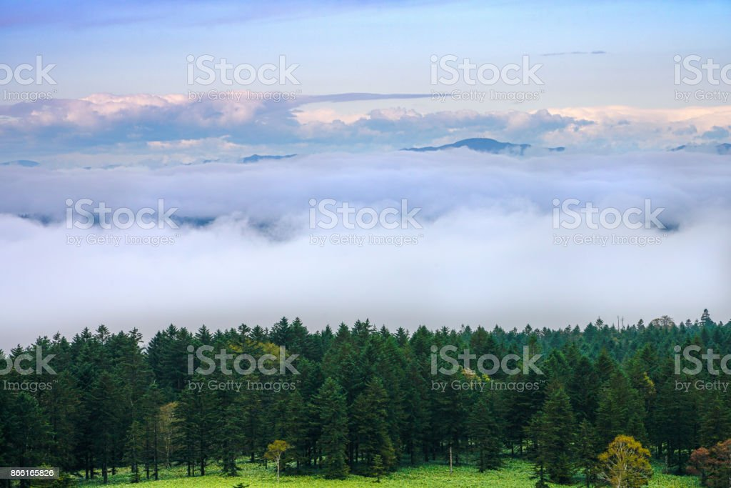 Sea Mist with green pine stock photo