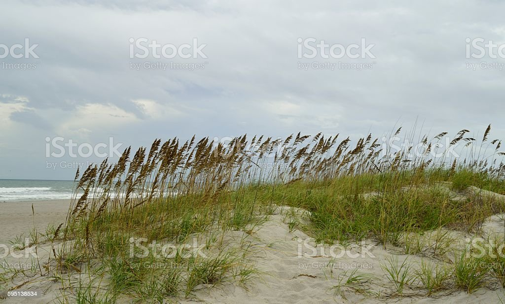 Sea oats and grass on a sandy pathway stock photo