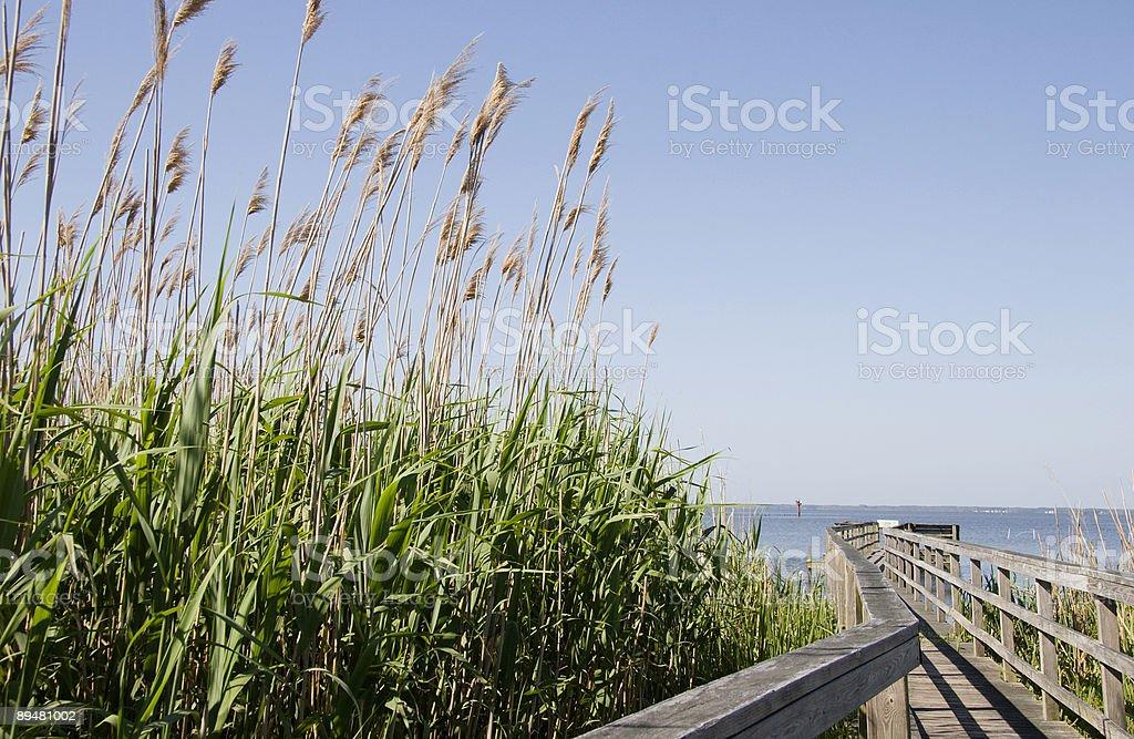 Sea Oats by the Boardwalk stock photo