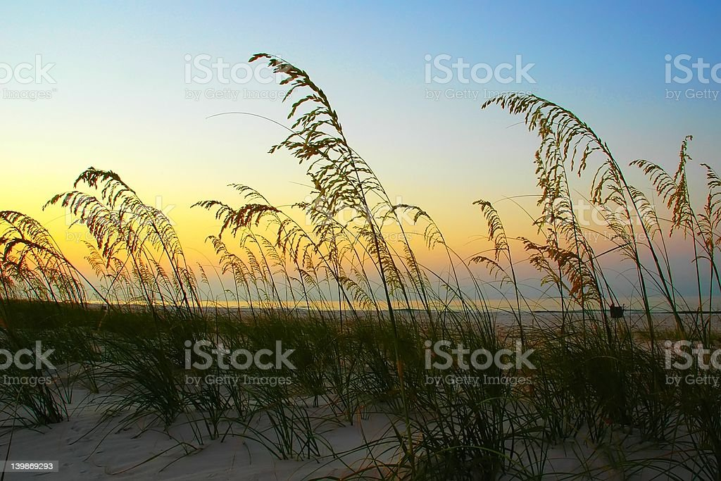 Sea Oats on Beach at Sunrise royalty-free stock photo