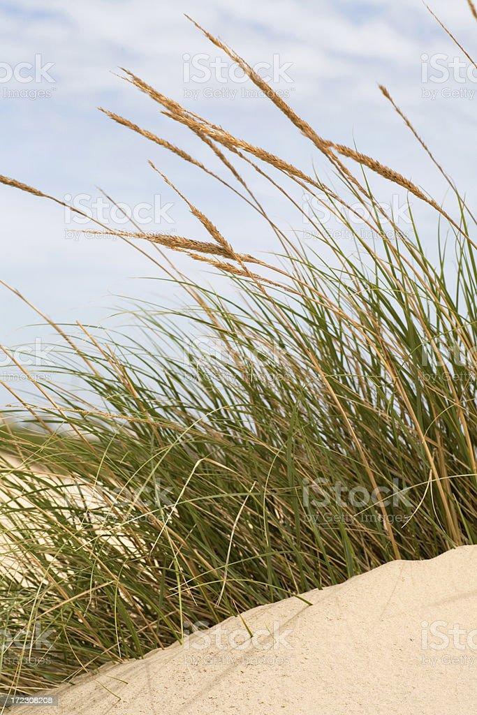 Sea Oats on Sand Dune royalty-free stock photo