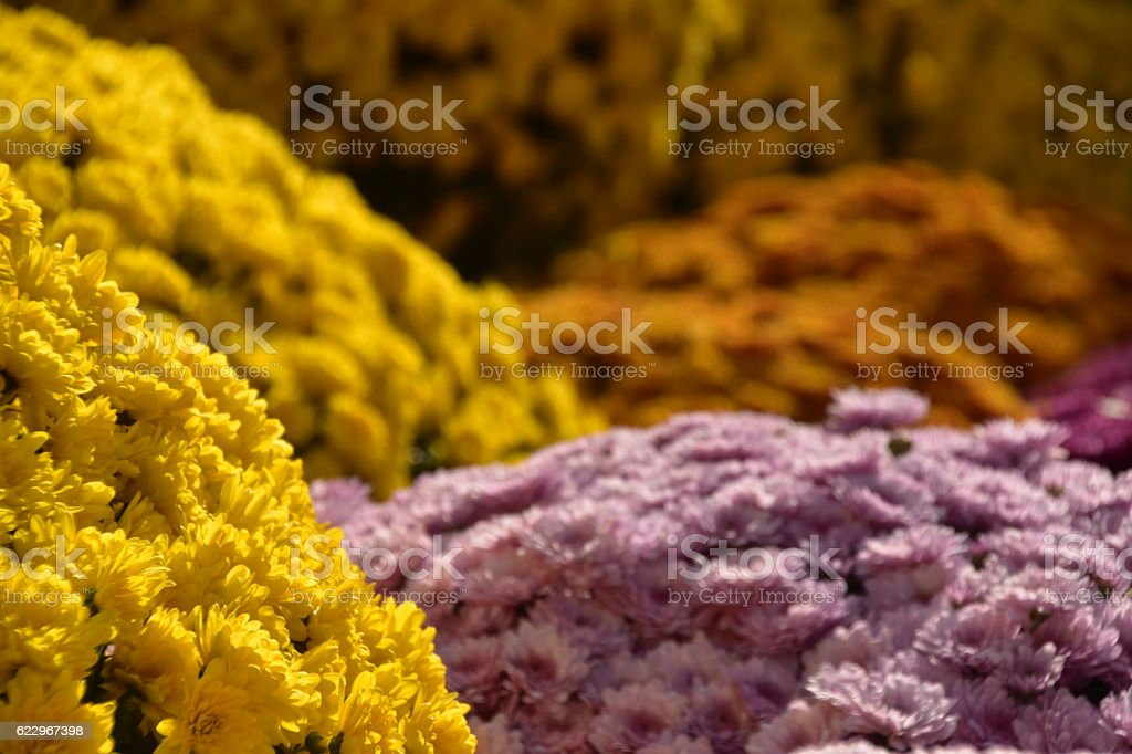 Sea of flowers at the market stock photo
