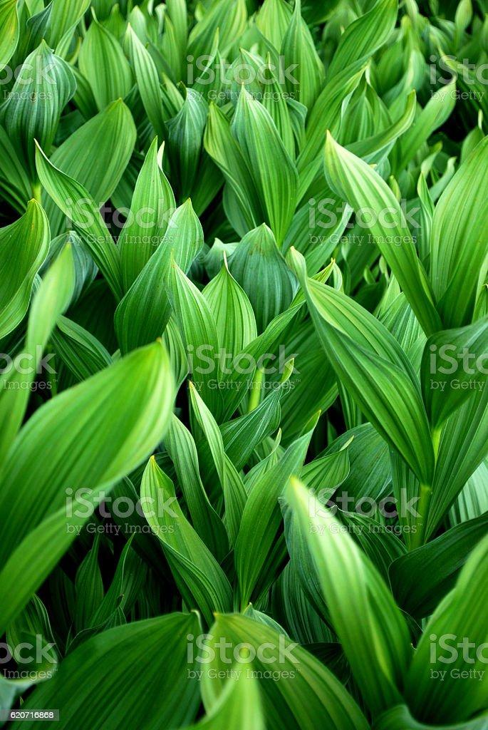 Sea of green plants stock photo