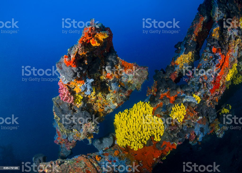 Sea of Sponges stock photo