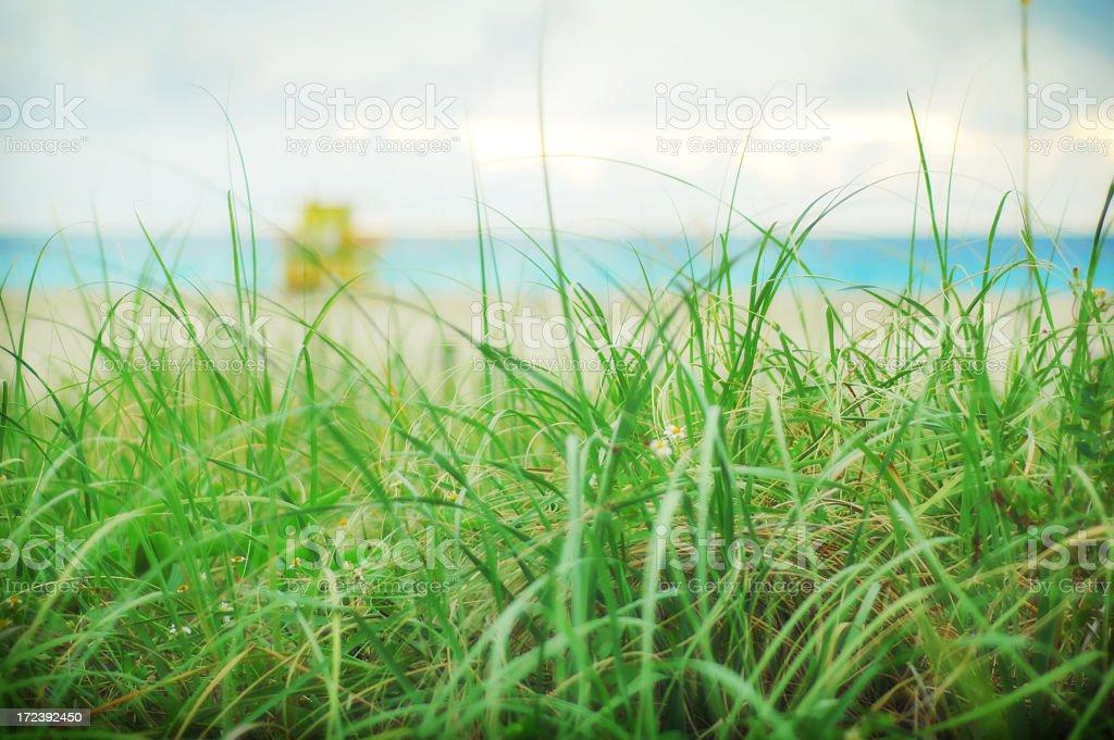 Sea ots Grass on the beach. royalty-free stock photo