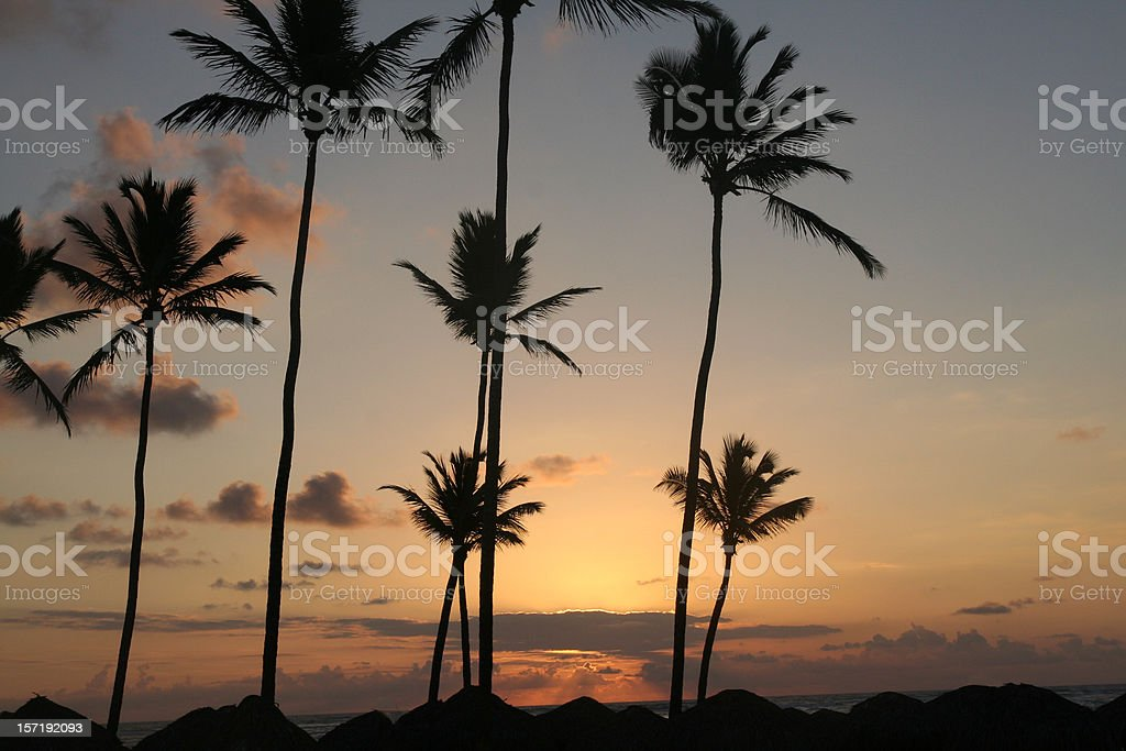 Sea Palms and Sun royalty-free stock photo