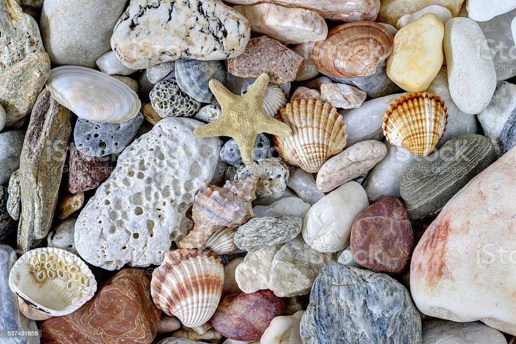 Sea Pebbles With Shells And Starfish stock photo