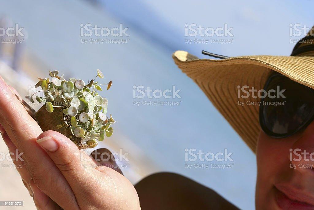 Sea plant royalty-free stock photo