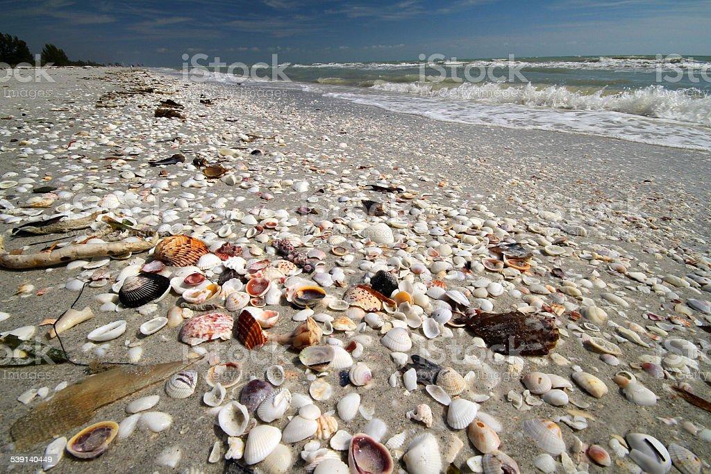Sea Sheel by the Ocean stock photo