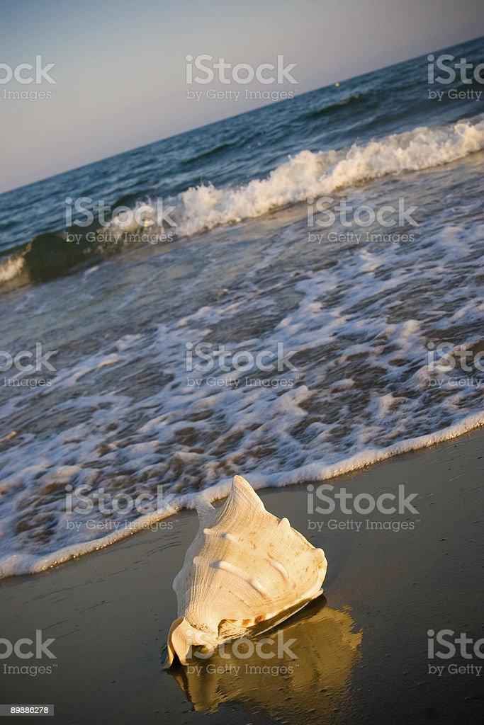 Sea shell 2 royalty-free stock photo