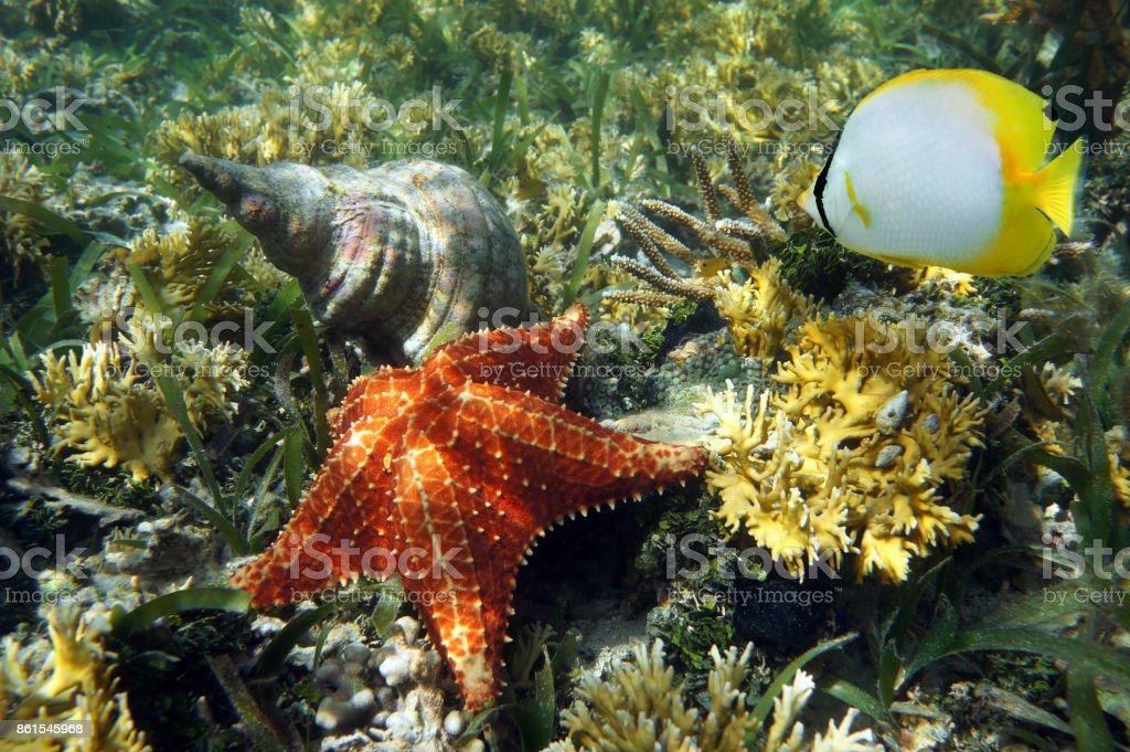 Sea shell and Cushion starfish stock photo
