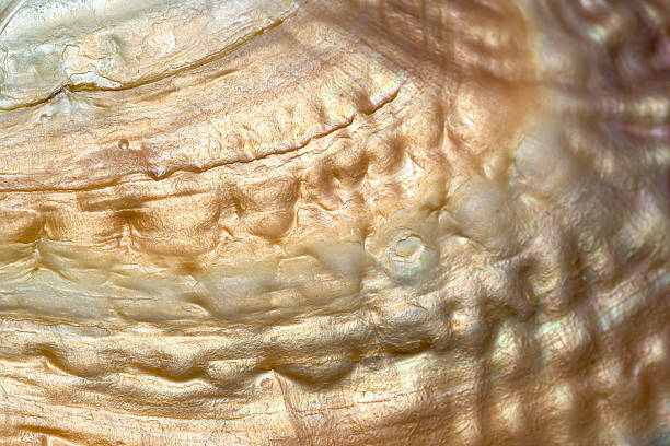 sea shell background, macro shot. - mother of pearl stock photos and pictures