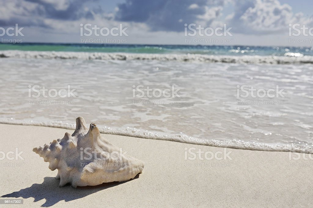sea shell beach of tulum royalty-free stock photo