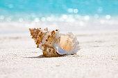 ビーチでの貝殻