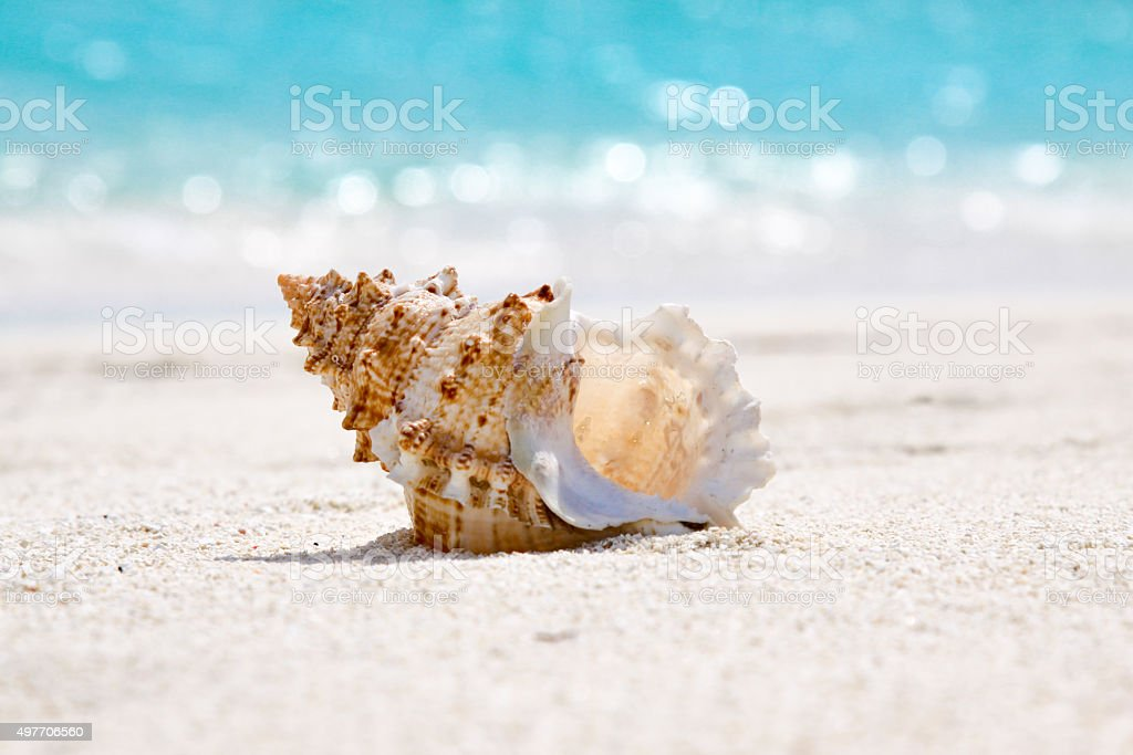 Sea Shell by the beach stock photo