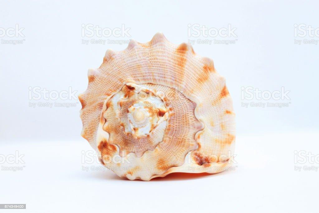 Sea shell close-up stock photo