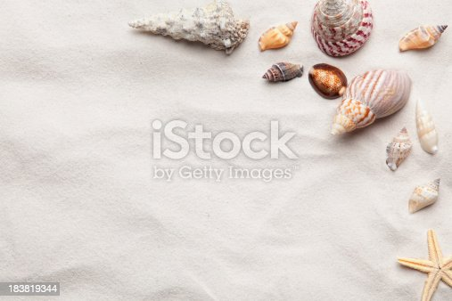 Various Shells arranged on beach sand with room for your copy or text.