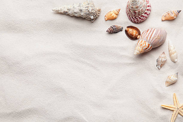 sea shell copy space scene - animal shell stock pictures, royalty-free photos & images