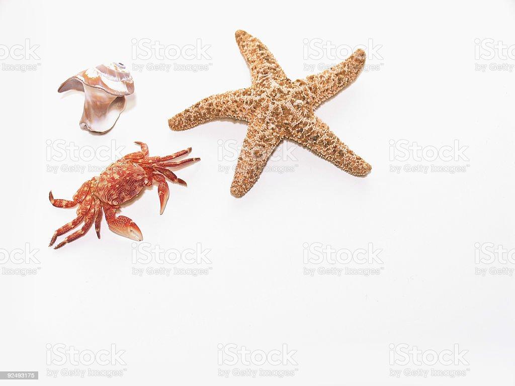 Sea Shell Crab and Dried Up Starfish royalty-free stock photo