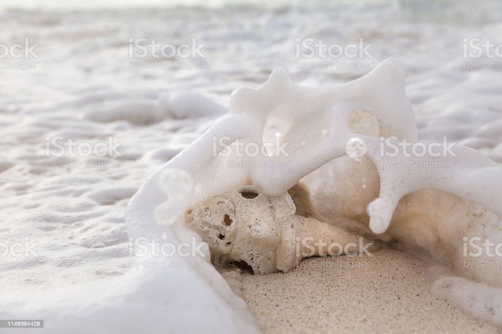 Sea shell on a sandy beach at sunrise in the summer stock photo