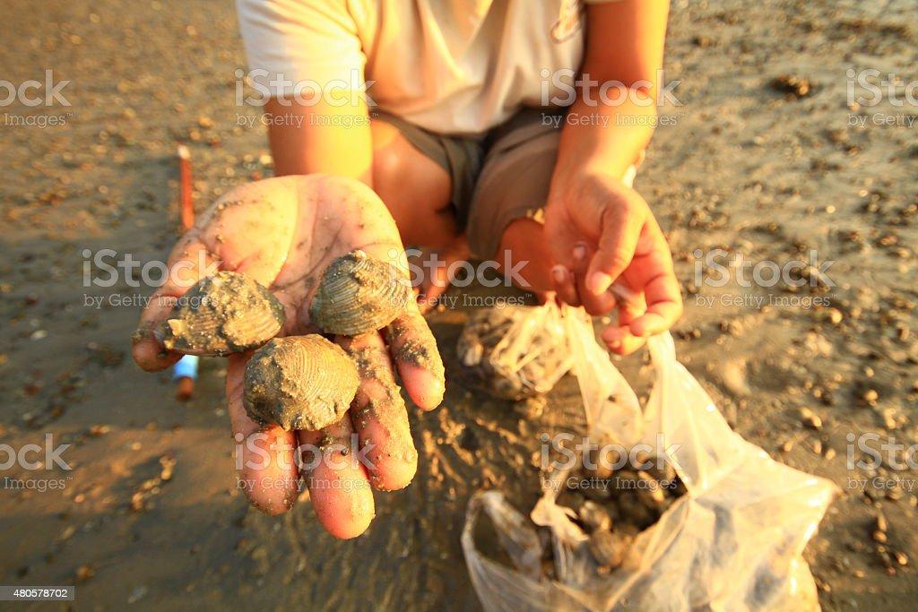 Sea  shell on hand stock photo