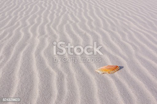 istock Sea Shell on Lines of Sand 524329623