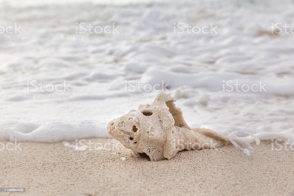 Sea shell on the beach over seascape background in the morning stock photo