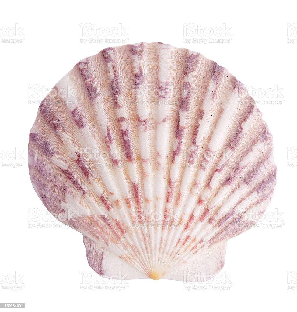 Sea shell royalty-free stock photo