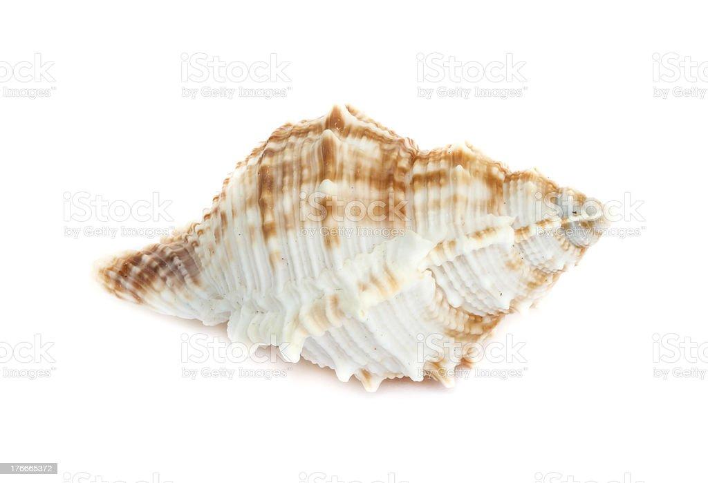 Carcasa al mar. foto de stock libre de derechos