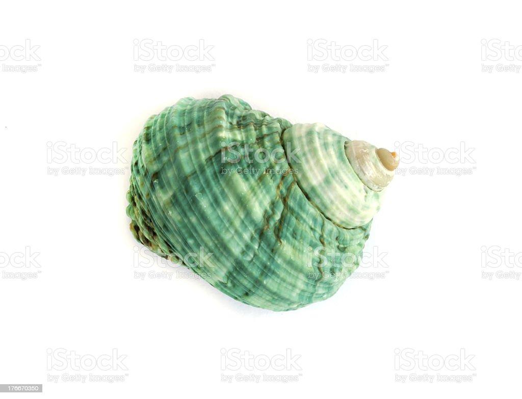 sea shell. royalty-free stock photo